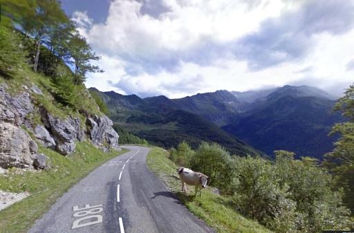 Opletten: veel dieren op de weg van de Col d'Agnès.